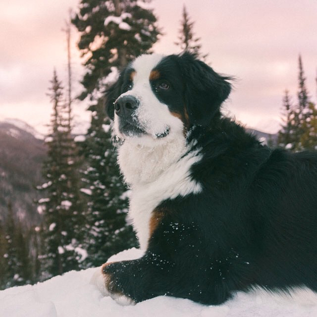 Outside Found Bus | Hilde, the ultimate adventure dog